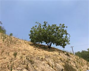 Photo of 3767 GLENALBYN Drive, Mount Washington, CA 90065 (MLS # 317005412)