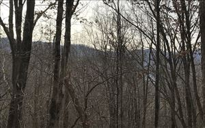 Photo of LT 20 SHOOTING CREEK TRAIL, Hayesville, NC 28904 (MLS # 273857)
