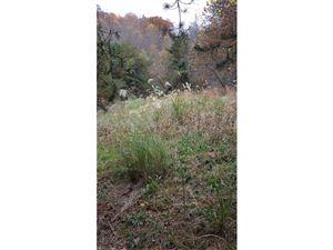 Photo of TBD Glen Eagle Lane #169, Mills River, NC 28759 (MLS # 3336346)