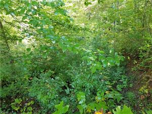 Photo of 263 Long Ridge Road #9 acres +-, Brevard, NC 28712 (MLS # 3320596)
