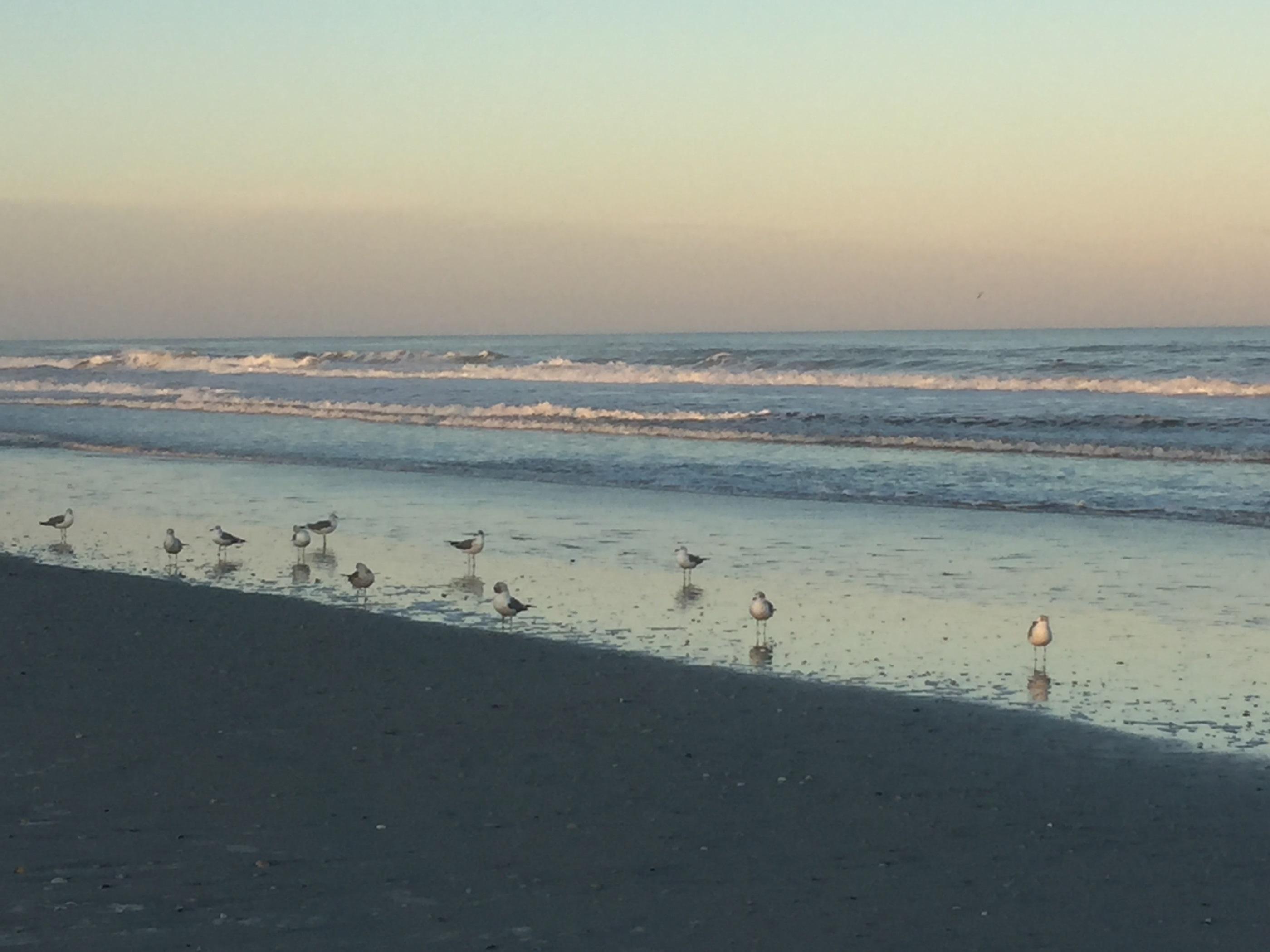 florida u0027s premier oceanfront destination hammock beach resort palm coast florida  rh   floridahomesrealestate