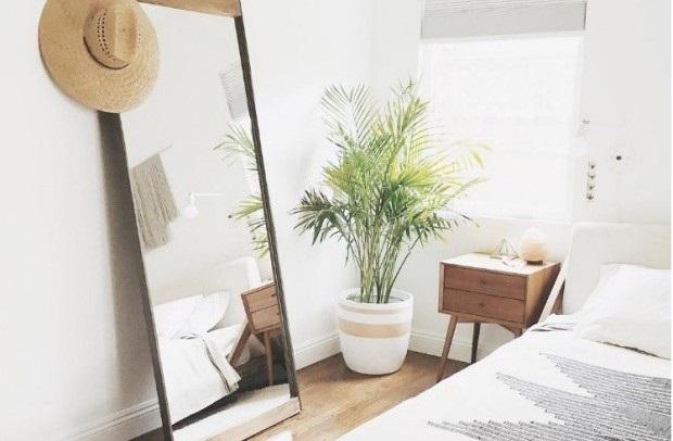 houseplants-palm-1-e1484940387977