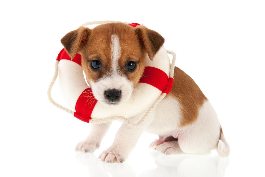 Puppy lifesaver