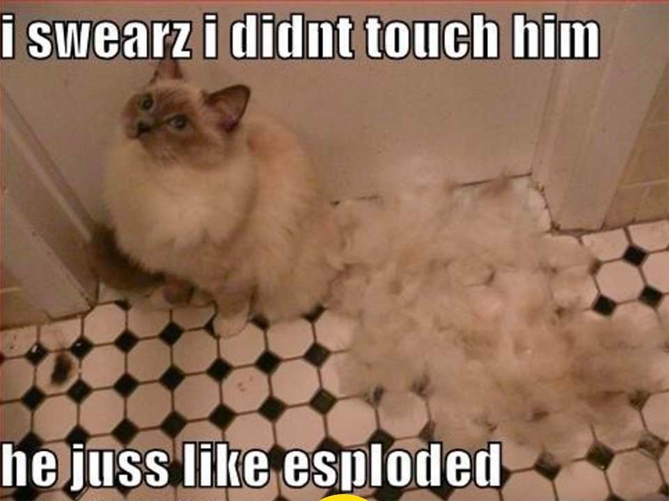 cat exploded