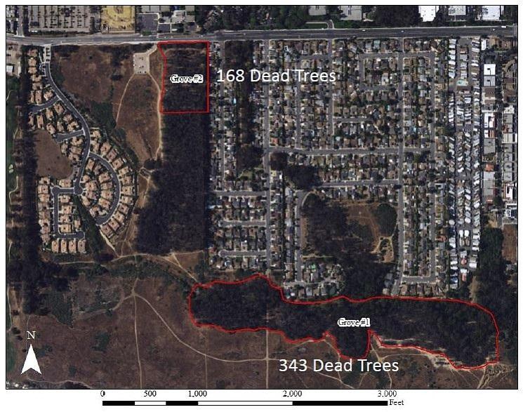 ellwood_dead_trees_image_t958