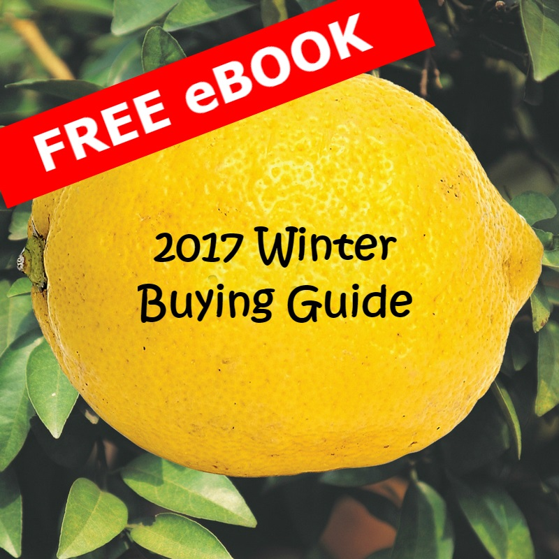 2017 Winter Buying Guide Button