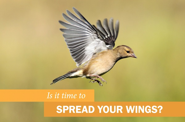 Is it time to SPREAD YOUR WINGS?