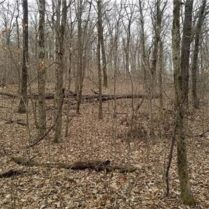 Photo of 23.89 AC CR 4099, Crosses, AR 72727 (MLS # 1107420)