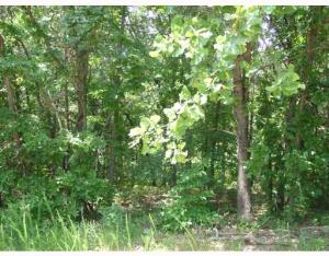 Photo of Ilford (Lot 1) Ln, Bella Vista, AR 72714 (MLS # 549733)