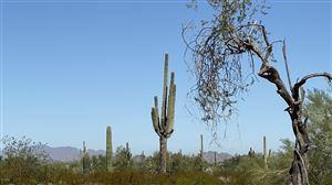 Photo of 0 W Dune Shadow (Lot 34) Road, Maricopa, AZ 85139 (MLS # 5996475)