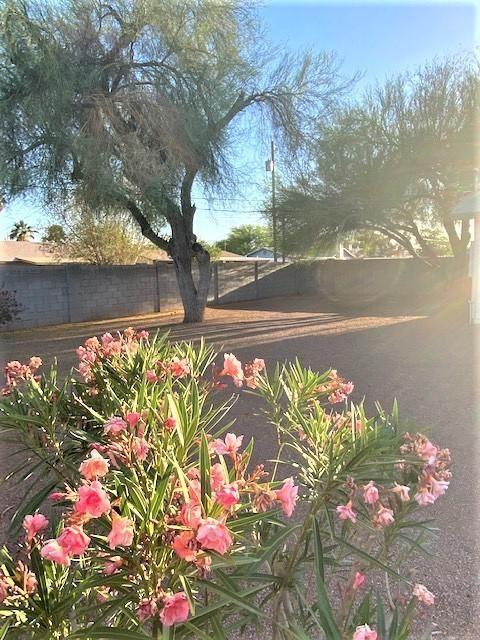 Photo of 749 E OSAGE Avenue, Apache Junction, AZ 85119 (MLS # 6227550)