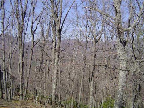Tiny photo for 6 A Buckeye Trail, Jasper, GA 30143 (MLS # 3677094)