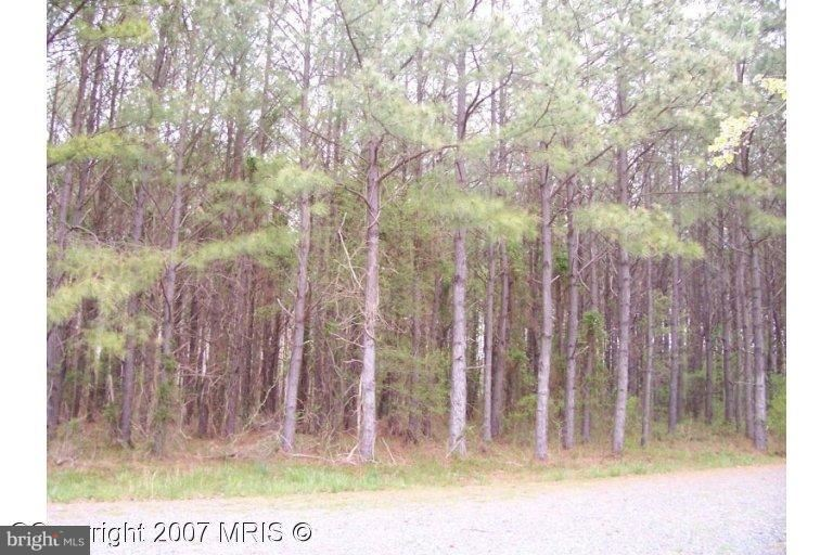 Photo of 29196 BUCK RUB RD. RD, TRAPPE, MD 21673 (MLS # 1000048561)