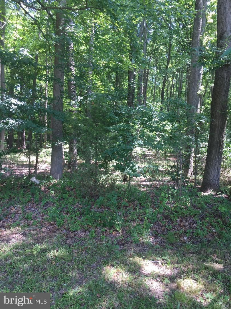 Photo of 0 WHITE MARSH RD, TRAPPE, MD 21673 (MLS # MDTA135796)