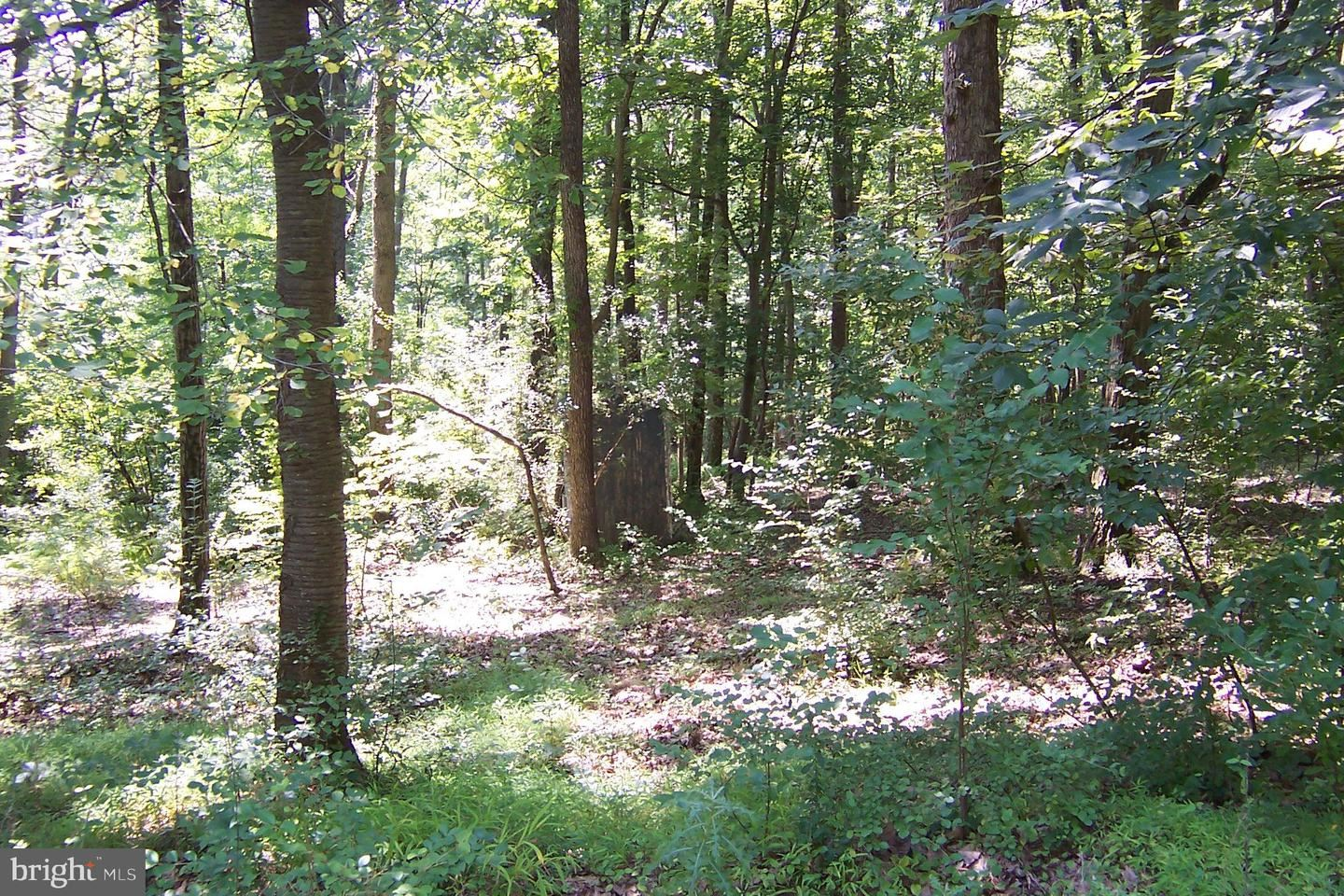 Photo of 21717 BOONSBORO MOUNTAIN ROAD, BOONSBORO, MD 21713 (MLS # MDFR268864)