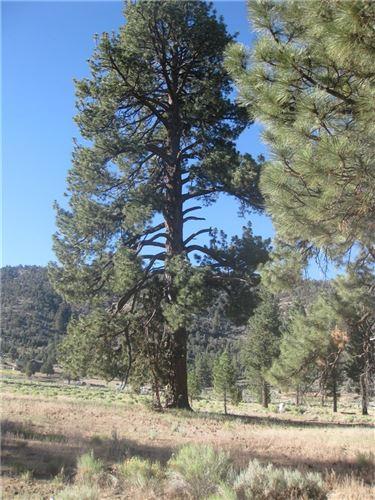 Photo of 2824 Erwin Ranch Road, Big Bear, CA 92314 (MLS # IV20183233)