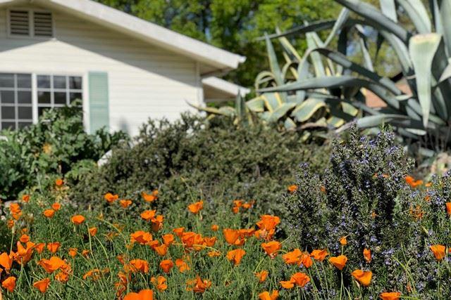 Photo of 505 Park Road, Ojai, CA 93023 (MLS # V1-5801)