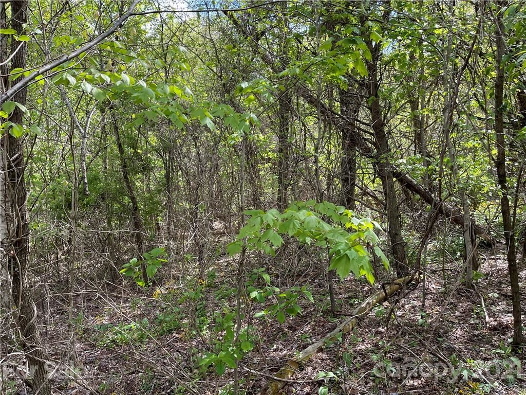 Photo of 302 Bearwallow Trail, Leicester, NC 28748 (MLS # 3738470)