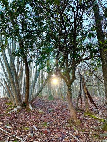 Photo of 333 Boundary Tree Pass Pass #16, Arden, NC 28704 (MLS # 3685584)