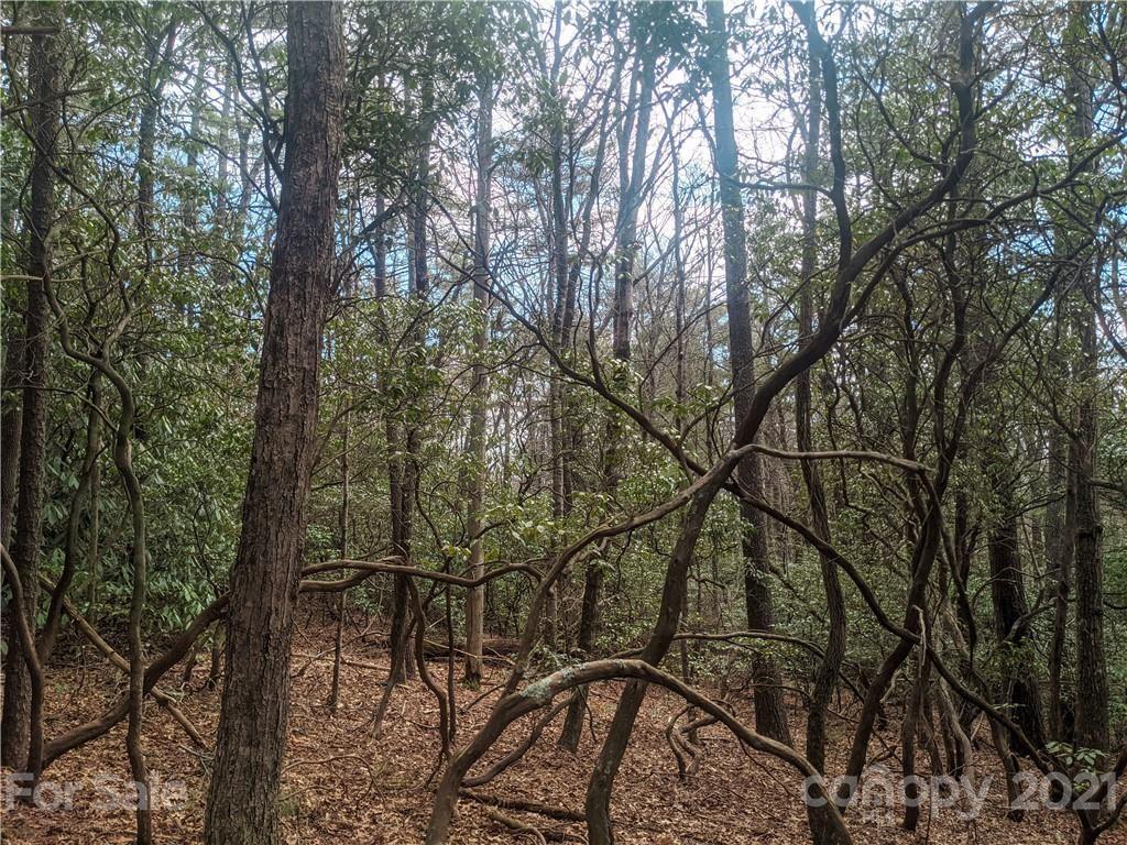 Photo of TBD Wipprecht Drive #7 & 8, Spruce Pine, NC 28777 (MLS # 3722955)