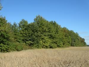 Photo of 0 Clark-Shaw Road, Powell, OH 43065 (MLS # 219036600)