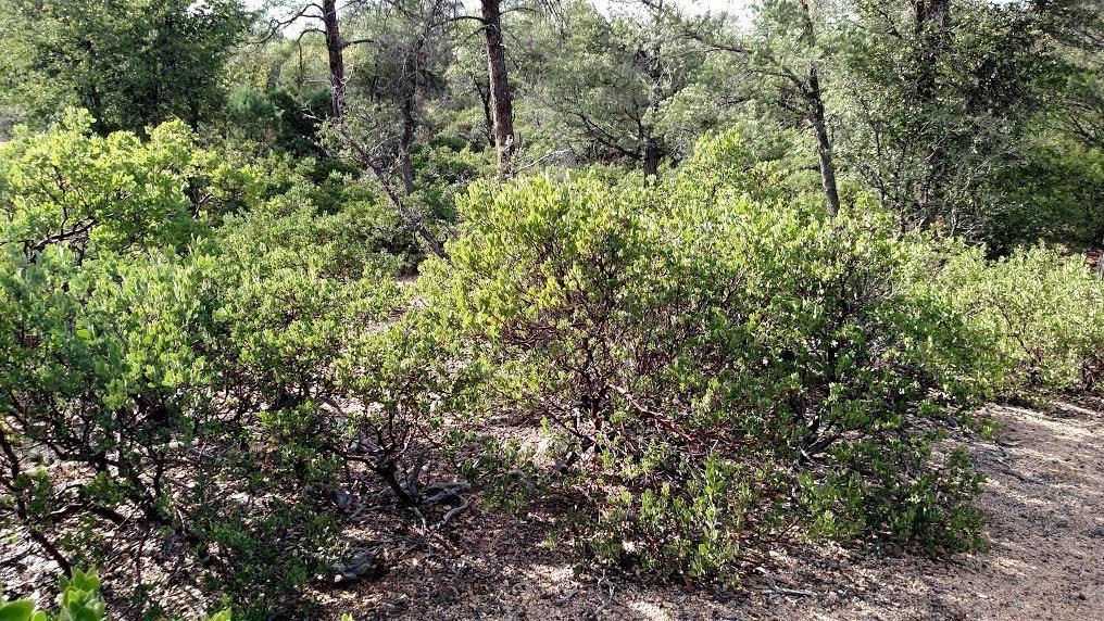 Photo of 619 N Grapevine Drive #410, Payson, AZ 85541 (MLS # 82891)