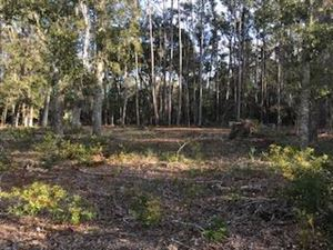 Photo of 8542 Shell House Road, Edisto Island, SC 29438 (MLS # 17031873)