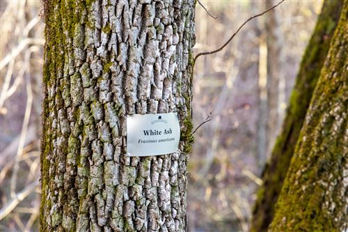 Tiny photo for 180.7 Acre Wagner Tract, Signal Mountain, TN 37377 (MLS # 1335243)