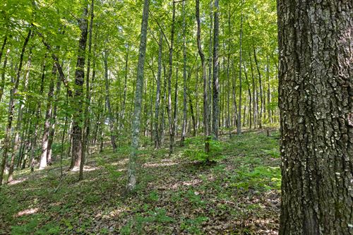 Tiny photo for 2319 Little Bend Rd, Signal Mountain, TN 37377 (MLS # 1337894)