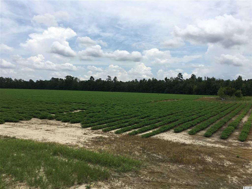TBD Huckleberry Rd., Galivants Ferry, SC, 29544, Not within a Subdivision Home For Sale