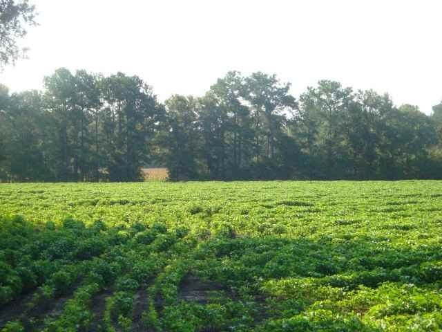 TBD Blakely Rd., Salters, SC, 29590, Not within a Subdivision Home For Sale