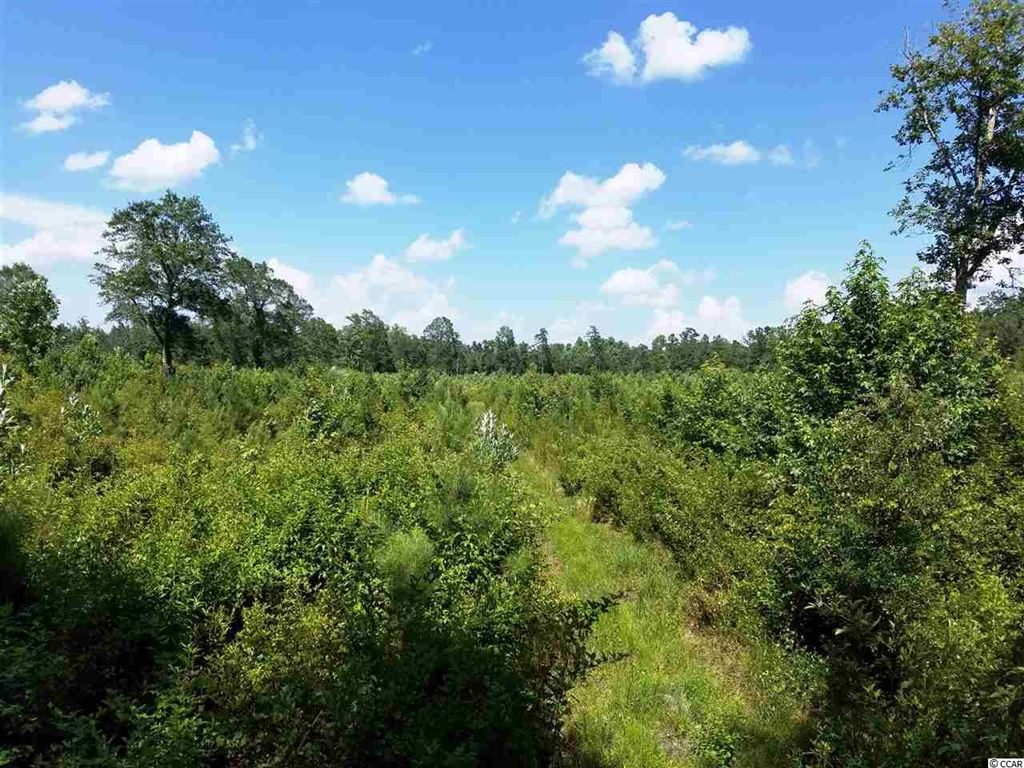 TBD Frank Cribb Rd., Hemingway, SC, 29554, Not within a Subdivision Home For Sale