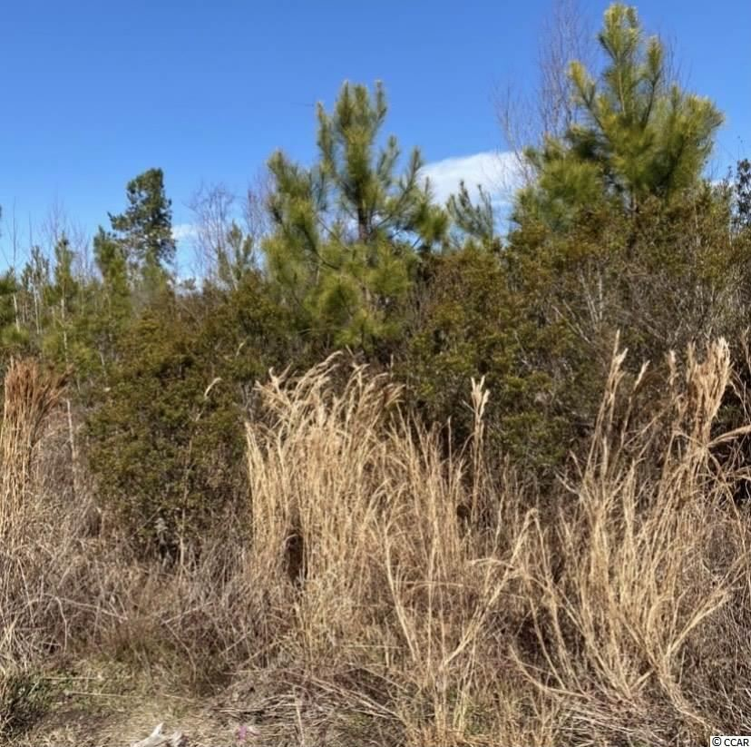 0 NE Easler Hwy, Greeleyville, SC, 29056, Not within a Subdivision Home For Sale