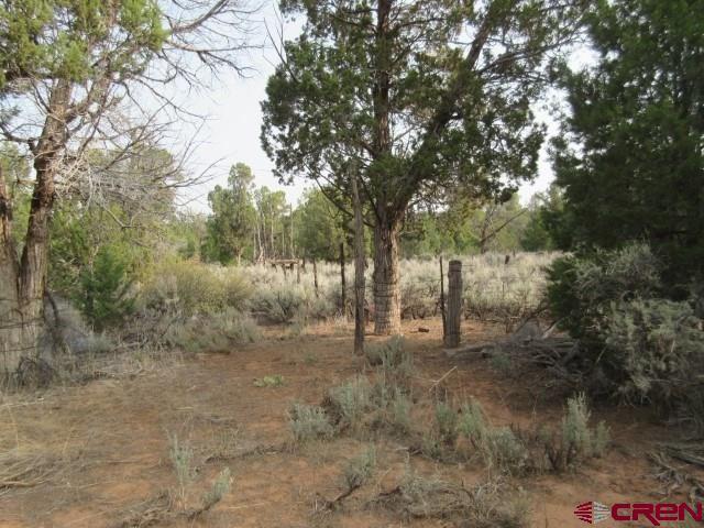 Photo of 1001 Road K, Dove Creek, CO 81324 (MLS # 787665)