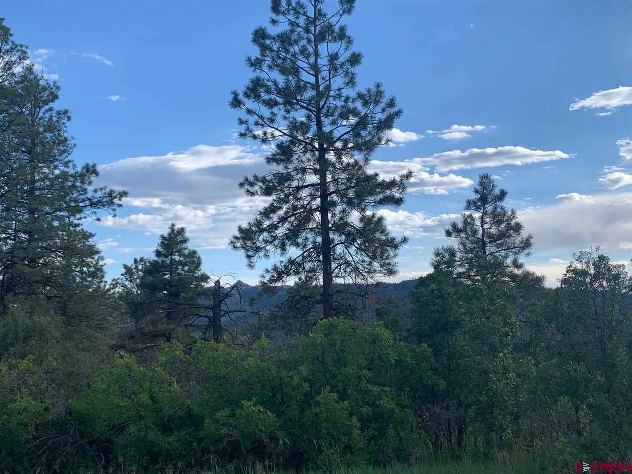 Photo of 926 Crooked Road, Pagosa Springs, CO 81147 (MLS # 783699)