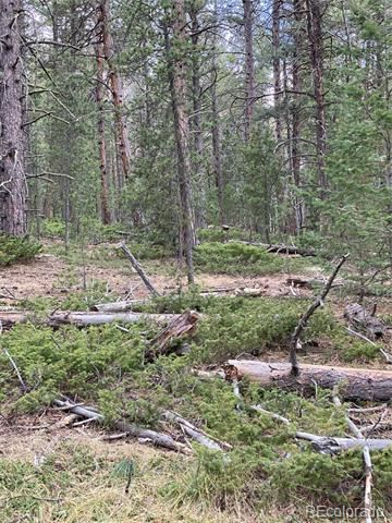 Lot 9X TBD Wallace Avenue, Conifer, CO 80433 - #: 8755848