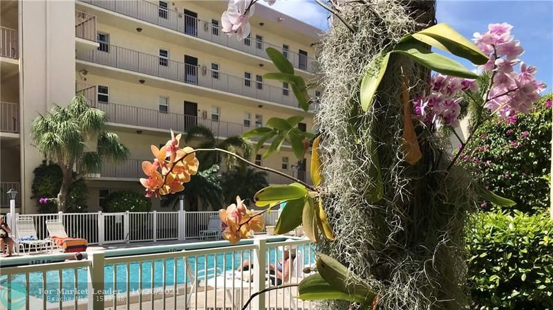 Photo of 4629 Poinciana St #320, Lauderdale By The Sea, FL 33308 (MLS # F10305479)