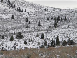 Photo of Parcel C Picket Pin Trail, STEVENSVILLE, MT 59870 (MLS # 18-2690)