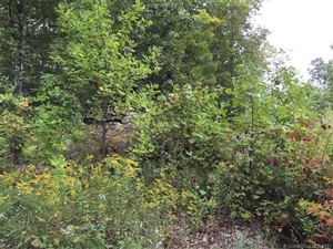 Photo of TBD Bushnell Hollow Road, Sprague, CT 06330 (MLS # E10223019)