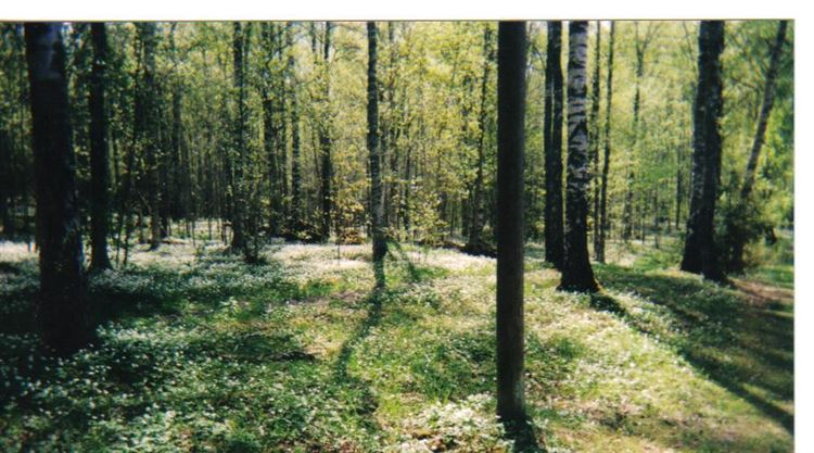 Photo for 0 old bound line Road, Wolcott, CT 06716 (MLS # F10071147)