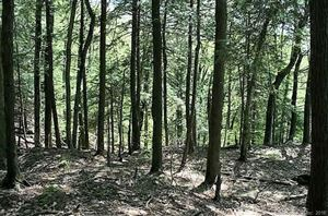 Photo of 00 Route 183, Norfolk, CT 06058 (MLS # 170003567)