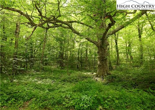 Photo of Lot 3 Woodland Springs Road, Boone, NC 28607 (MLS # 231258)