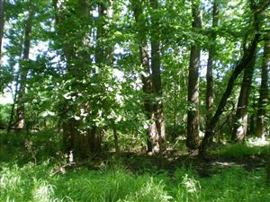 Photo of Lot 58 Forest Marsh Loop, Townsend, GA 31331 (MLS # 132919)