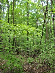 Photo of Lot 6 Kens Way, Townsend, GA 31331 (MLS # 132947)