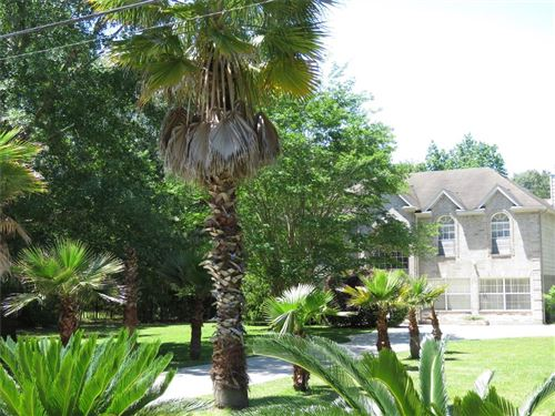 Photo of 23957 Majestic Forest Drive, New Caney, TX 77357 (MLS # 25709013)