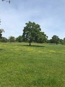 Photo of TBD - Lot 1 CR 220, Anderson, TX 77830 (MLS # 66669083)