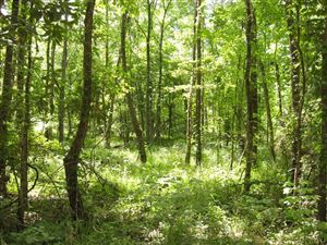 Photo of 4.2 Ac Gourd Creek Drive, Huntsville, TX 77340 (MLS # 82763136)