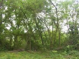Photo of Lot 6-A Lakeview Drive, Conroe, TX 77302 (MLS # 29947617)