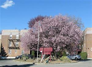 Photo of 30 Davenport Avenue, New Rochelle, NY 10804 (MLS # 4821205)