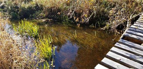 Photo of Swamp Pond Road Tr 37, Narrowsburg, NY 12764 (MLS # 5120277)